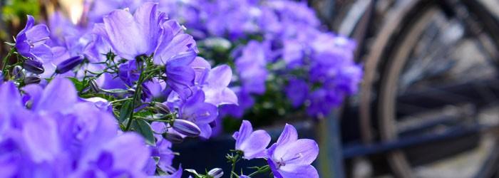 perfect weekend - purple flowers